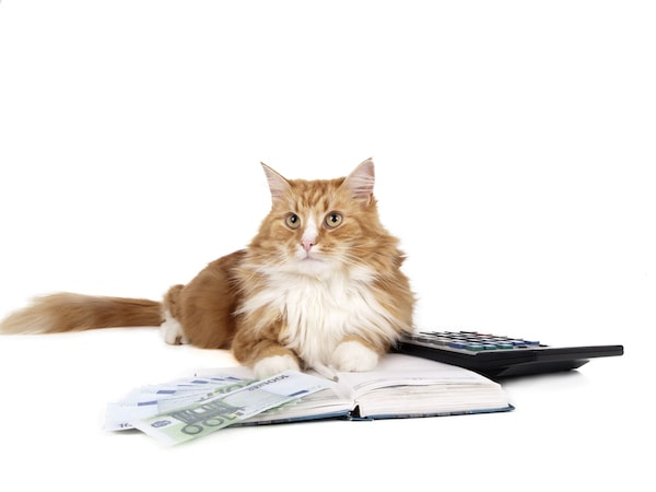 How to Set Your Freelance Copywriting Fees